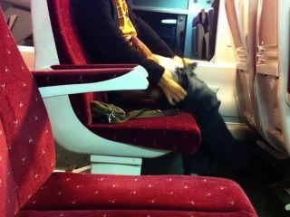 Jerk On Train