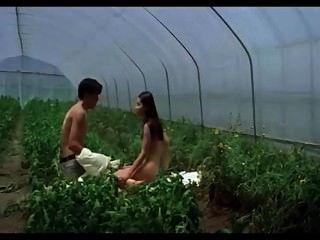 Korean Catiii Donna Bae Plumblossom 2000 Du Na Bae