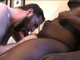 All Amateur Bears 6